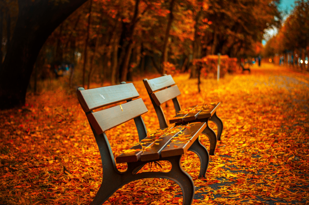 rsz_fall_photo_of_life_and_benches